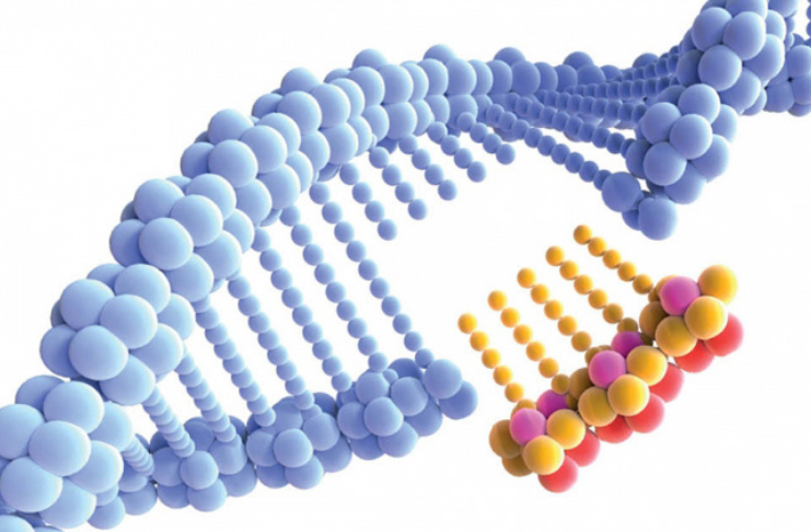 gene cortado
