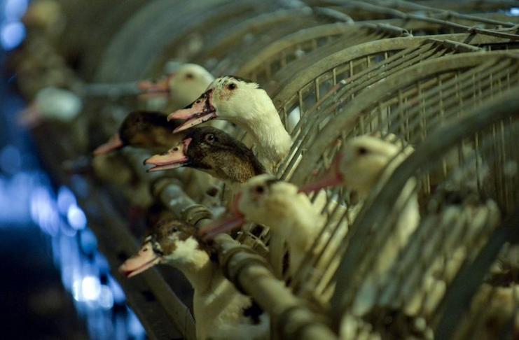 França matará 600.000 aves em esforço para conter a gripe aviária
