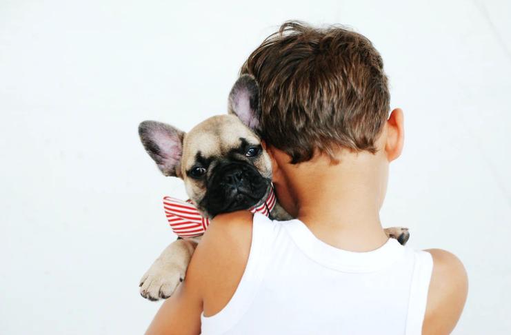Dicas para evitar uma batalha caótica pela custódia de cães em um divórcio
