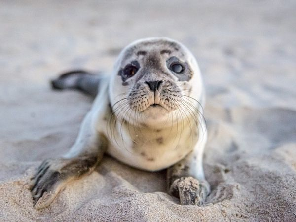 Homem salvou a vida de uma foca bebê enquanto ela estava no meio da estrada