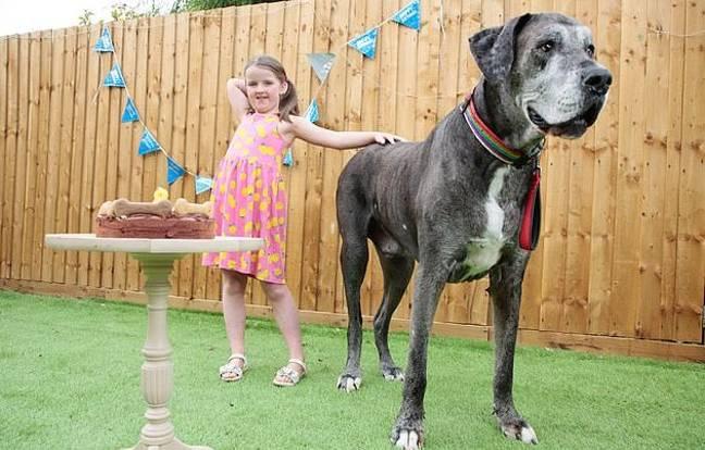 O cão mais alto do mundo, Freddy, morreu com 8 anos