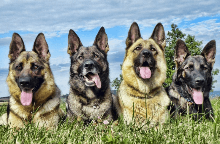 O cão de resgate em NJ salva a vida do proprietário após ele cair durante um derrame