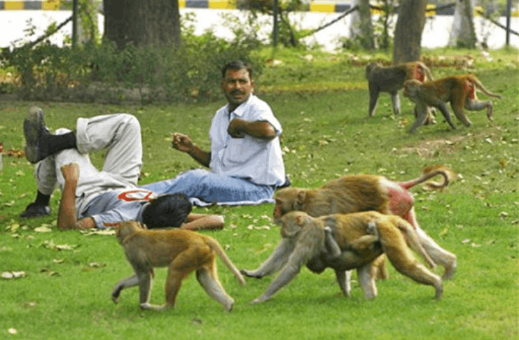 Macacos supostamente agarram gêmeos recém-nascidos na Índia, matando um