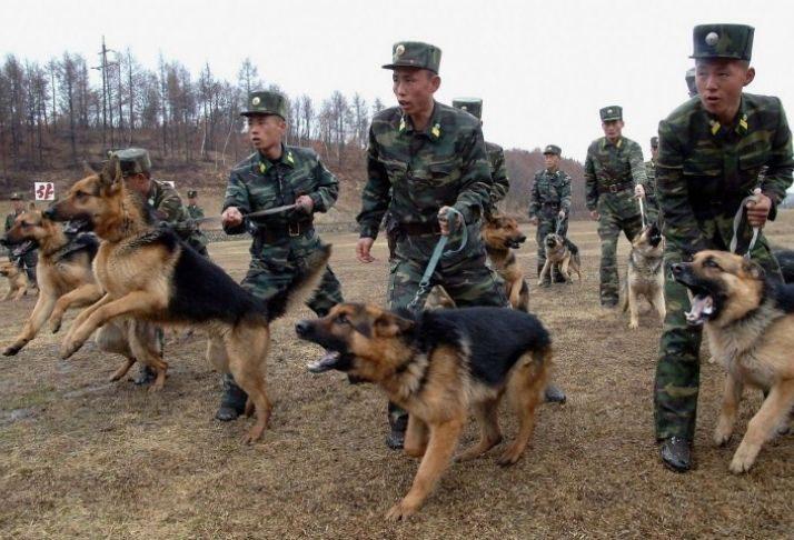 Relatório da ONU diz que tortura e trabalho forçado são praticados nas prisões da Coreia do Norte