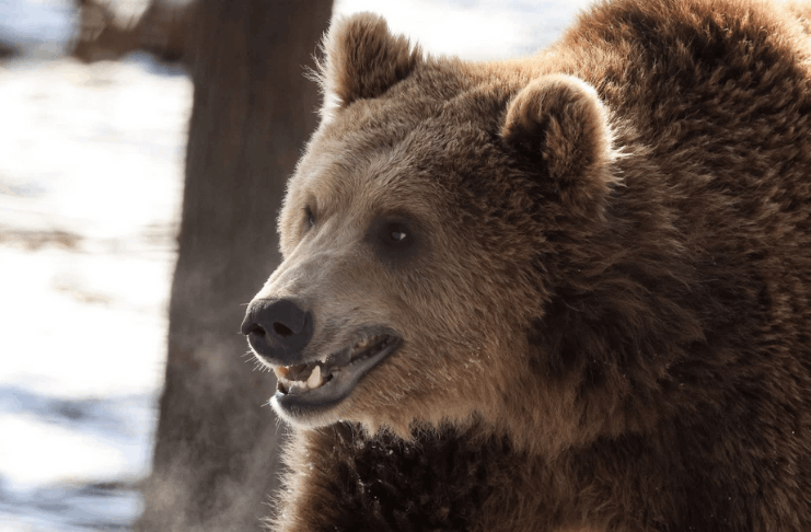 Guarda Costeira dos EUA resgata esquiador atacado por urso na montanha do Alasca