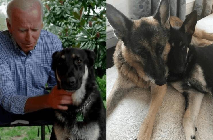 Os cães Biden, Major e Champ, devem aparecer no PSA durante o Puppy Bowl